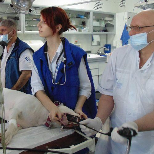 ветеринарная эндоскопия киев