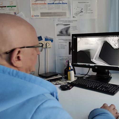 ветеринарный рентген киев